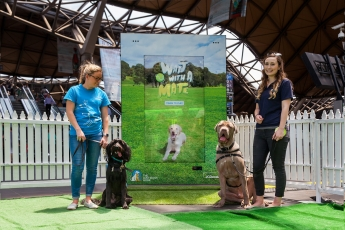 JCDecaux Lost Dogs Home Interactive